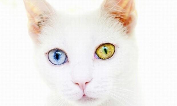 Cat Simulator B