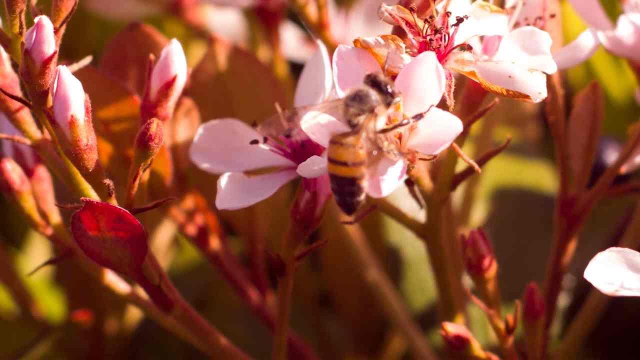 Australia, api ubriache intorno al palazzo del Parlamento