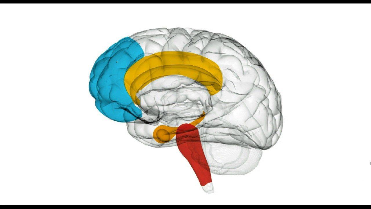 geni zombie cervello