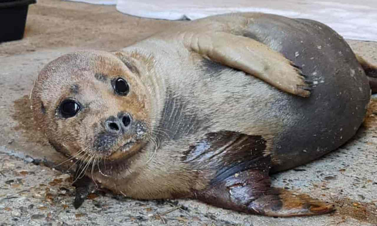 freddie cucciolo foca